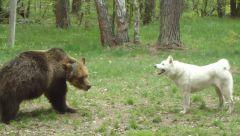 Испытание по медведю 21.05.11 003.JPG