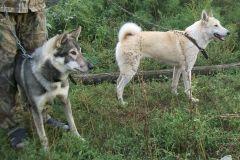 Собаки Батвинкина А.П.