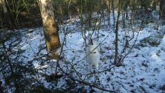 Охота зима 2011- 010.JPG