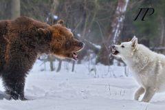 состязание по медведю 01.12.12.jpg