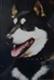 Наши собаки - последнее сообщение от Rossomaha