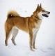 Нефтеюганская районная выставка охотничьих собак, фотоотчет - последнее сообщение от Anna