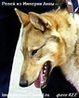31-ая Калининградская областная выставка охот.собак - последнее сообщение от repey