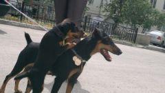 03.06.2012 Тюмень Рика с дочкой