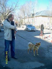 Областная выставка в г.Юрюзань 19.04.2014г.