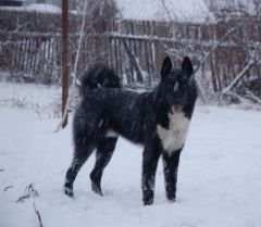 Люблю снег