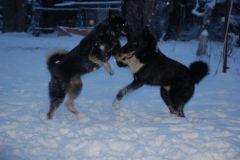Радость первого снега
