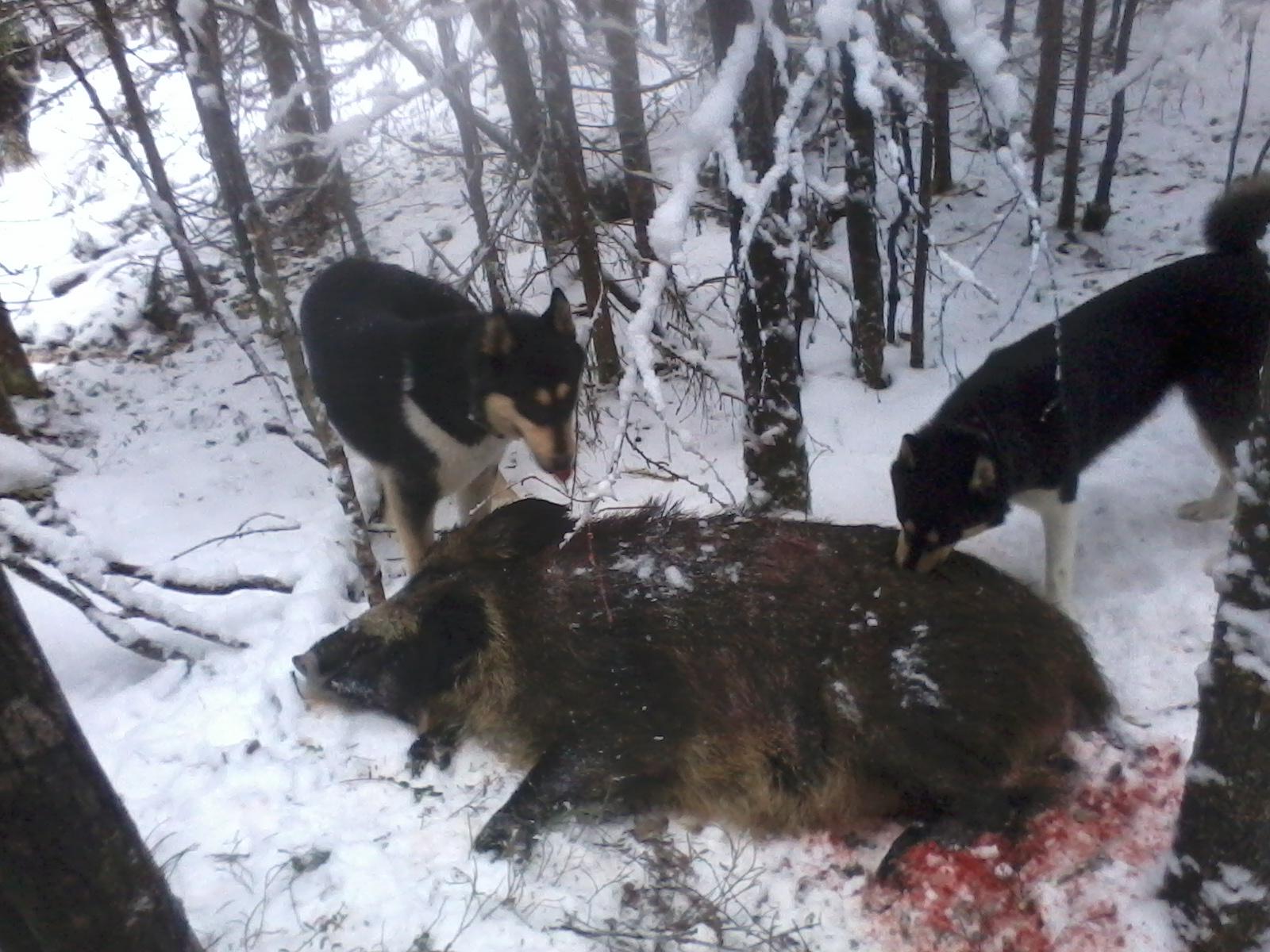 Сарма, Скиф декабрь 2013, Лен. обл.