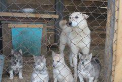 Нора и щенки