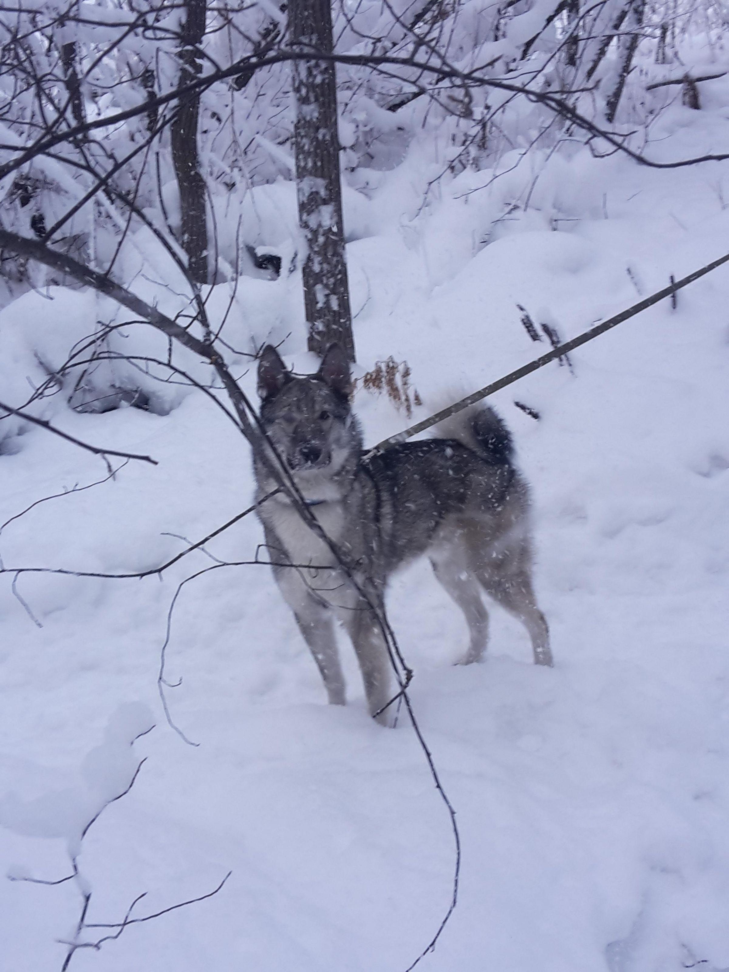 Ранняя зима - рай для ЗСЛ  :)
