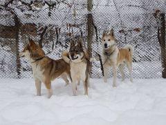 Сара,Белла и Здрач,мой собачки,моя гордость !!!