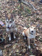 Бойка и Лиска