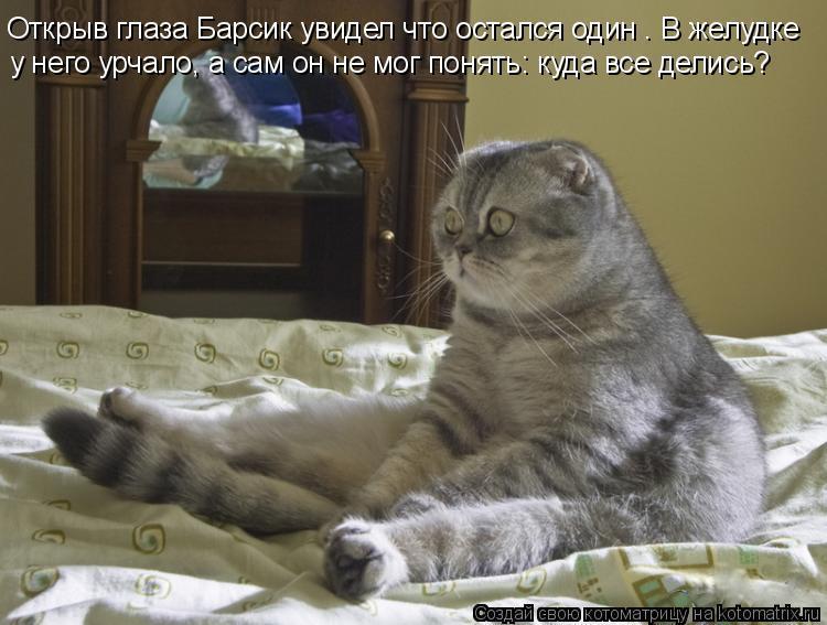 Котенок хочет кошку что делать