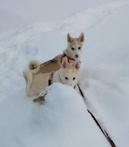 Зая Зефир  на снегу.jpg