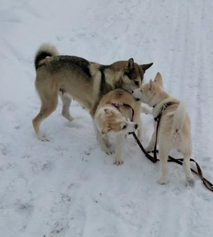 Дети с мамой на снегу.jpg