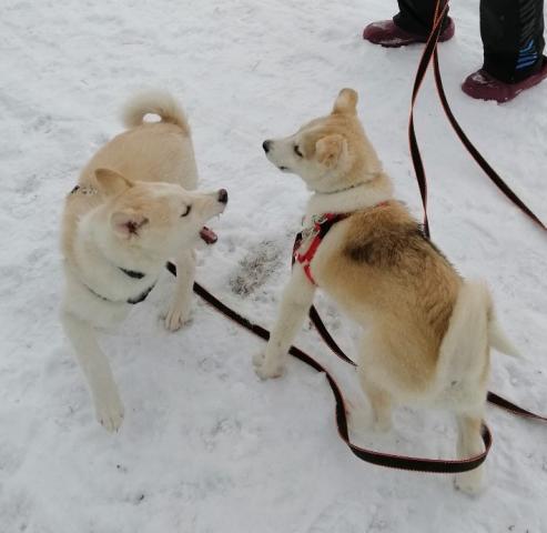 Игры на снегу.jpg