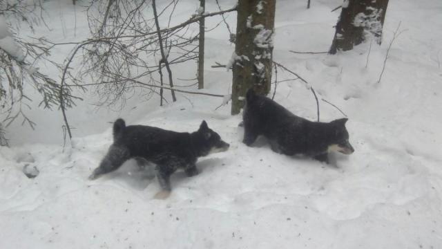 щенки в лесу 2.jpg