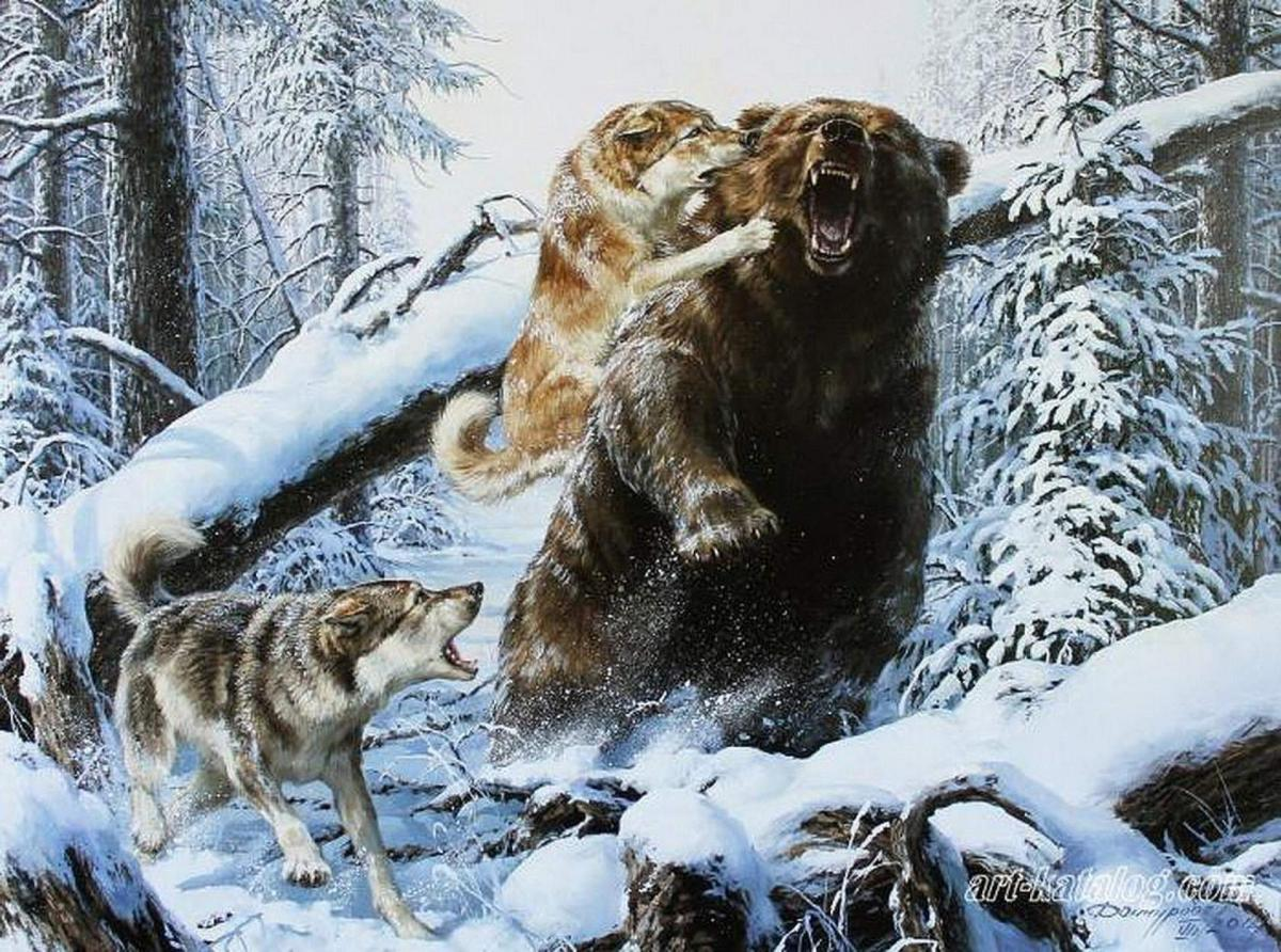 картинка охота на медведя с собаками вышла