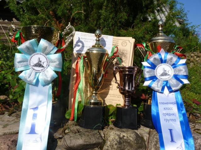 Трофеи с выставки.JPG