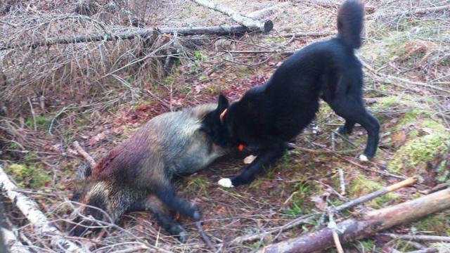 Sever.1st.w.boar.jpg