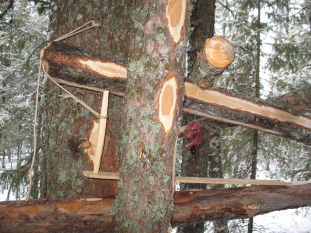 Видео как сделать деревянный капкан