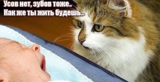 http://dogexpert.ru/uploads/monthly_12_2015/post-8073-0-79632200-1450364008.jpg