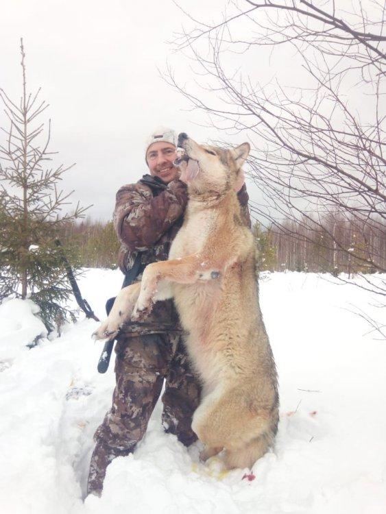 Волчица с Перми.jpg