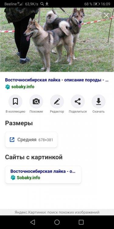Screenshot_20210128_160928_com.yandex.browser.jpg