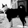 Продаются щенки РЕЛ 2 месяца .4/3 06.01.2019 - последнее сообщение от Дмитрий83
