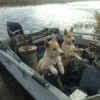 Ветеринары на форуме, отзов... - последнее сообщение от SergeyK