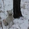 1-ая Миасская открытая городская выставка охотничьих собак, г.Миасс Челябинской области - последнее сообщение от vladimir174