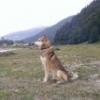 Горно-Алтайские республиканские состязания по белке на Семинском перевале. - последнее сообщение от evgenk