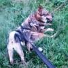 История охоты - последнее сообщение от anna 888